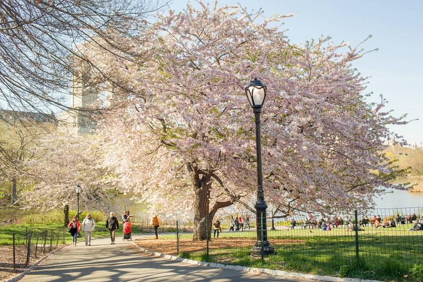 paques-voyage-autocar-new-york-organise-printemps-cerisiers-fleurs-floraison